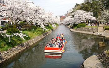 樱花盛开的松川游览船(富山市)
